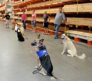 Image Result For Dog Training Classes Redlands Ca