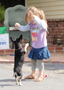 Yucaipa, Redlands, dog training, obedience class, dog socialization
